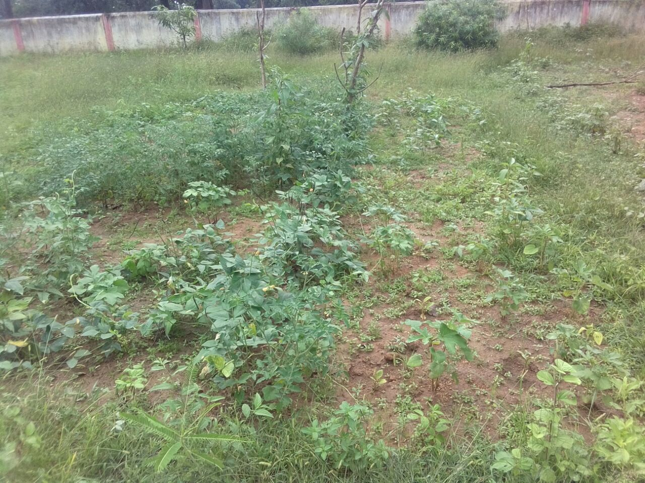 Kitchen Garden of Tilaidadar